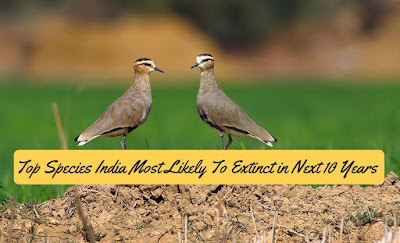 Top Species India Most Likely To Extinct in Next 10 Years