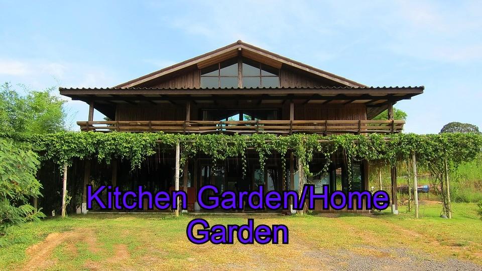 Kitchen garden/Home garden
