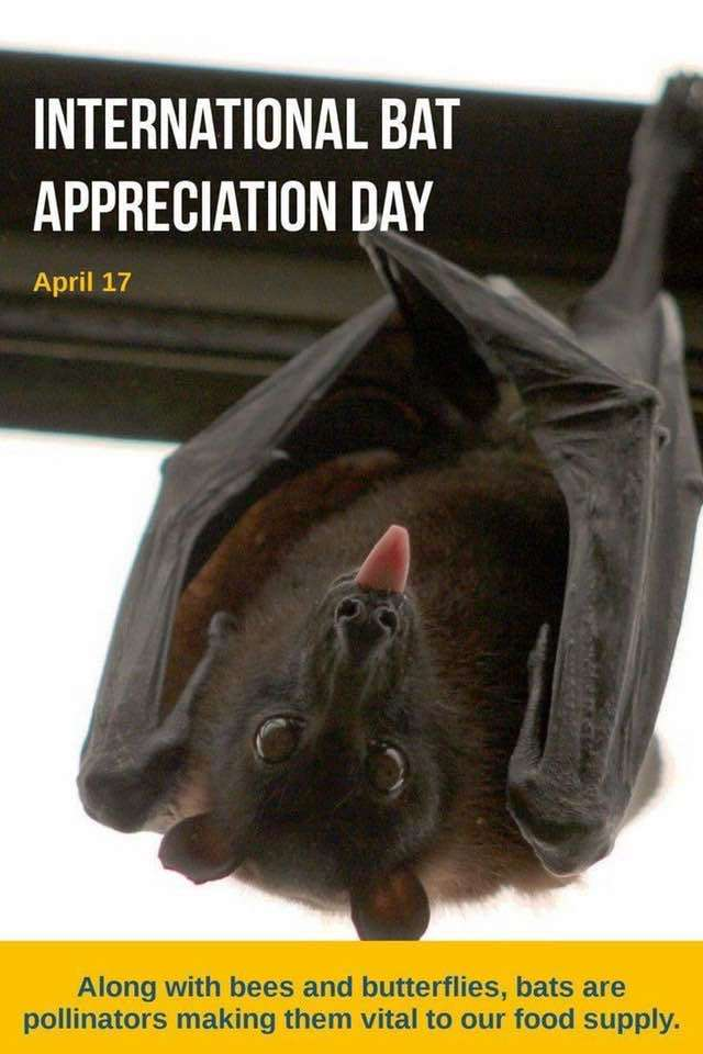 International Bat Appreciation Day Wishes Awesome Images, Pictures, Photos, Wallpapers