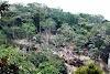 População denuncia grandes desmatamentos no município de Taquaritinga do Norte