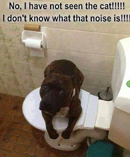 Dog Humor : I have not see the cat?