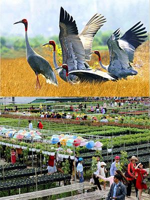 Tour Du lịch Đồng Tháp - Làng hoa Sa Đéc - Tràm chim Tam Nông từ Sài Gòn