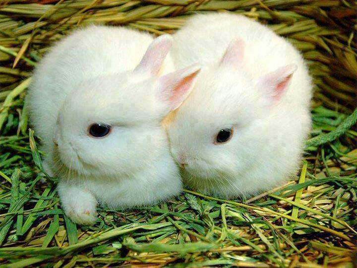 Lovely Cute Baby Couple Wallpaper Lovely Cute Awesome Rabbit Images Allfreshwallpaper