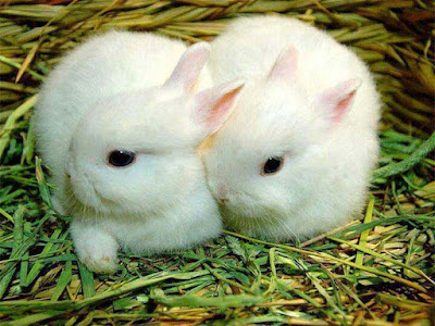white-color-rabbit-cute-image
