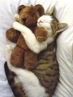 download besplatne slike za mobitele mačka