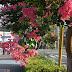 真夏の早朝ランニング:○乞田川 ×大栗川