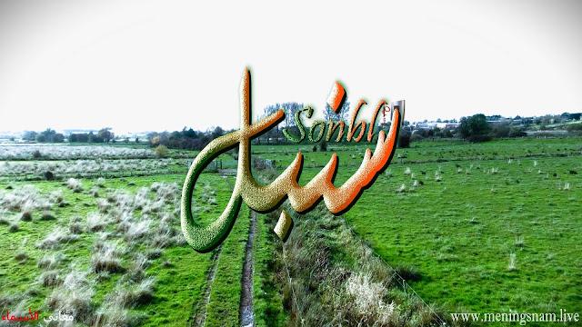 معنى اسم سنبل وصفات حامل هذا الاسم Sonbl