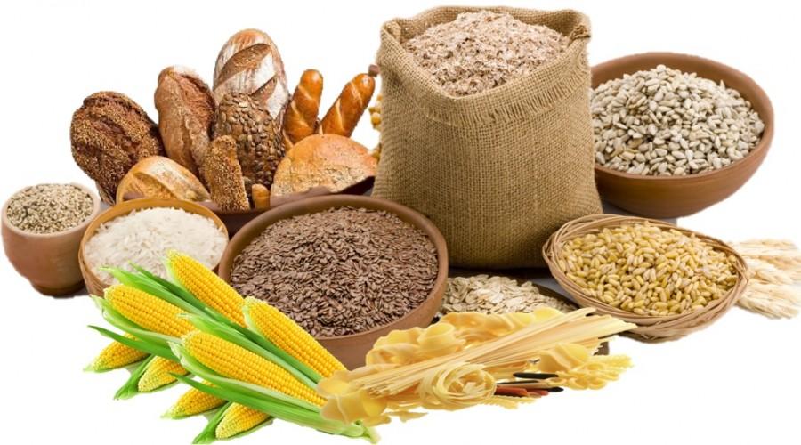Fungsi karbohidrat, Protein, Lemak, dan Air pada Sistem ...