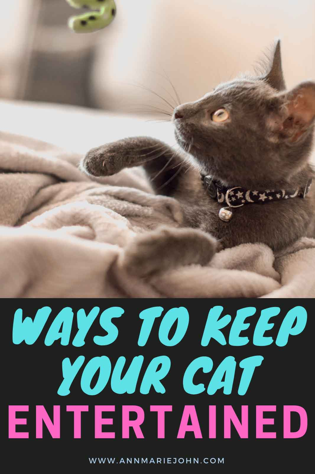 Ways To Keep Your Cat Entertained