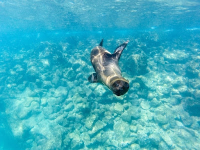 Snorkeling in Galapagos Islands