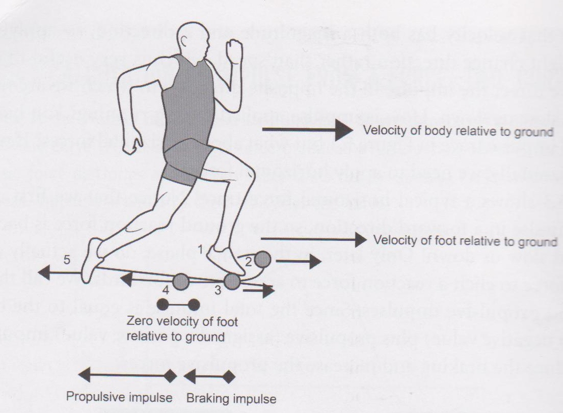 What Are The Biomechanical Principles That Underpin A Fast Running Technique For Spring Running
