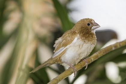 Cara Memperbaiki Ruji Sangkar Burung yang Rusak