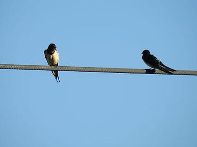 Belajar Dari Burung Untuk Tidak Kesetrum Bertengger di Kabel Listrik