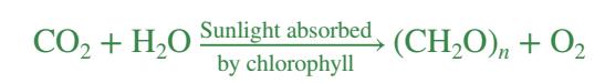 fotosintesis oksigenik, autotrof, bakteri autotrof