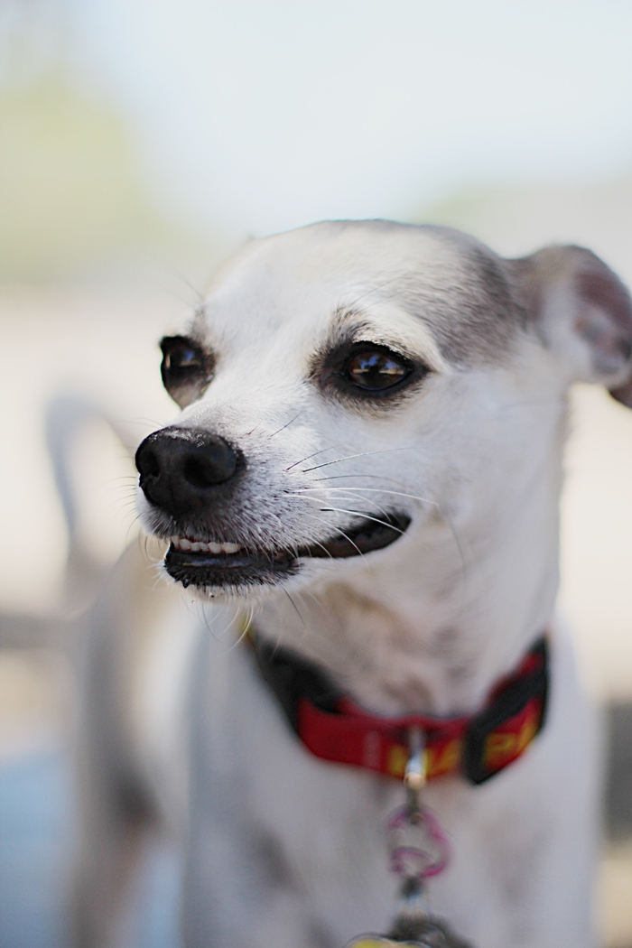 Safe Calm Dog Training Collar
