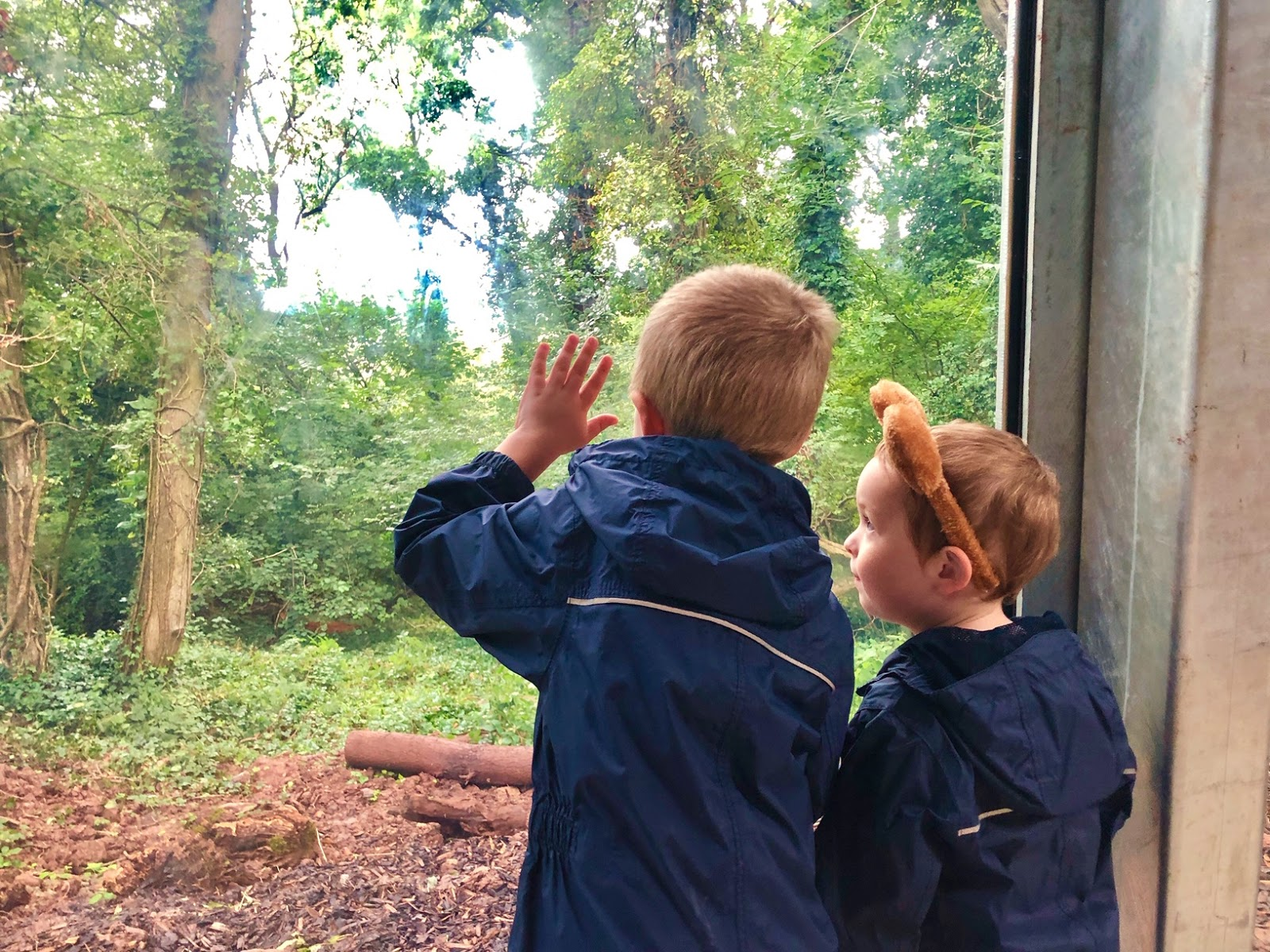 two children in puddle suits looking for bears through a large glass window at wild place project