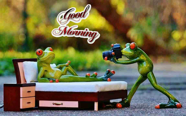 very funny good morning image of cute frog model