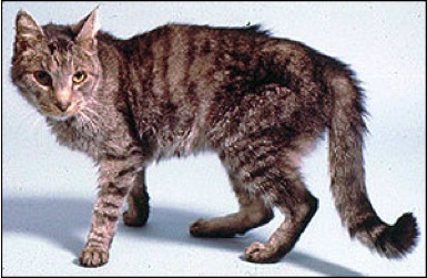 Animal Endocrine Clinic Top 10 Signs Of Hyperthyroidism In Cats