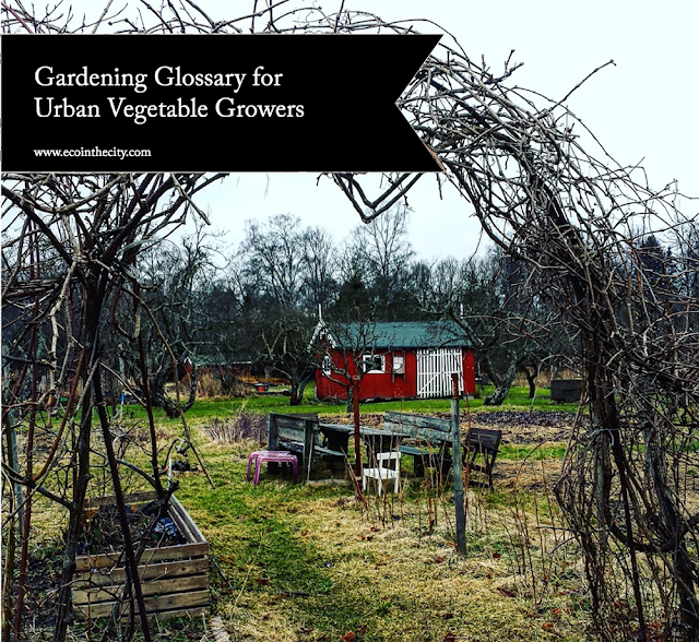 Gardening glossary for urban vegetable growers