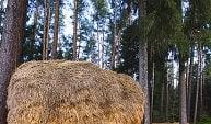 Menurut Supratman & Alam (2009) manajemen hutan merupakan aplikasi prinsip-prinsip ilmiah dan penglolaan hutan (teknis kehutanan) dengan mempertimbangkan prinsip-prinsip bisnis dan sosial untuk mencapai tujuan tertentu. Manajemen hutan pada dasarnya terikat dengan beberapa aspek termasuk aspek biologi dan silvikultur. Defenisi manajemen hutan mencangkup berbagai macam aspek yang luas seperti inventarisasi hutan, pengelolaan daerah aliran sungai (DAS), serta aspek kehutanan yang lain.