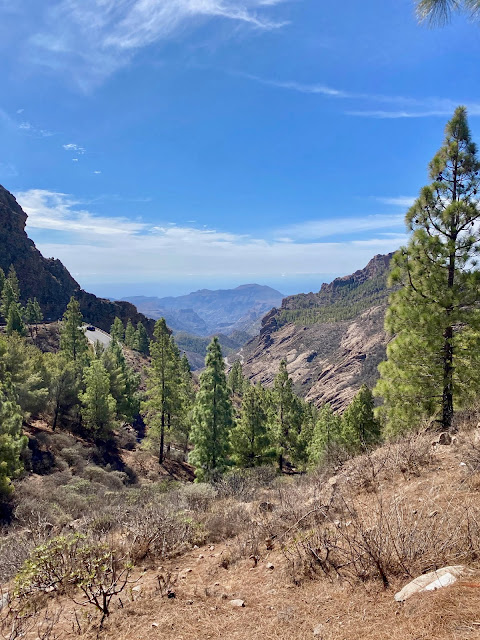 Mountain views with pine trees, on the hiking trail to Roque Nublo, Gran Canaria, Spain