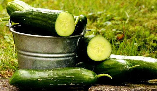 Would you like to get in shape by taking advantage of the slimming effect of cucumber With cucumber, you will lose 1 kg in 3 days and you will get into the clothes you want.