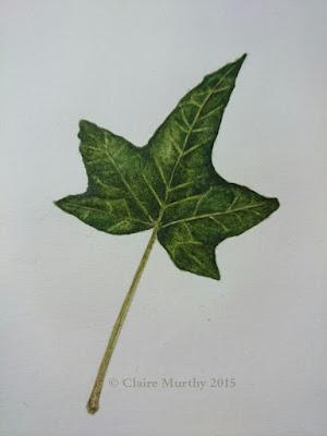 botanical study of ivy