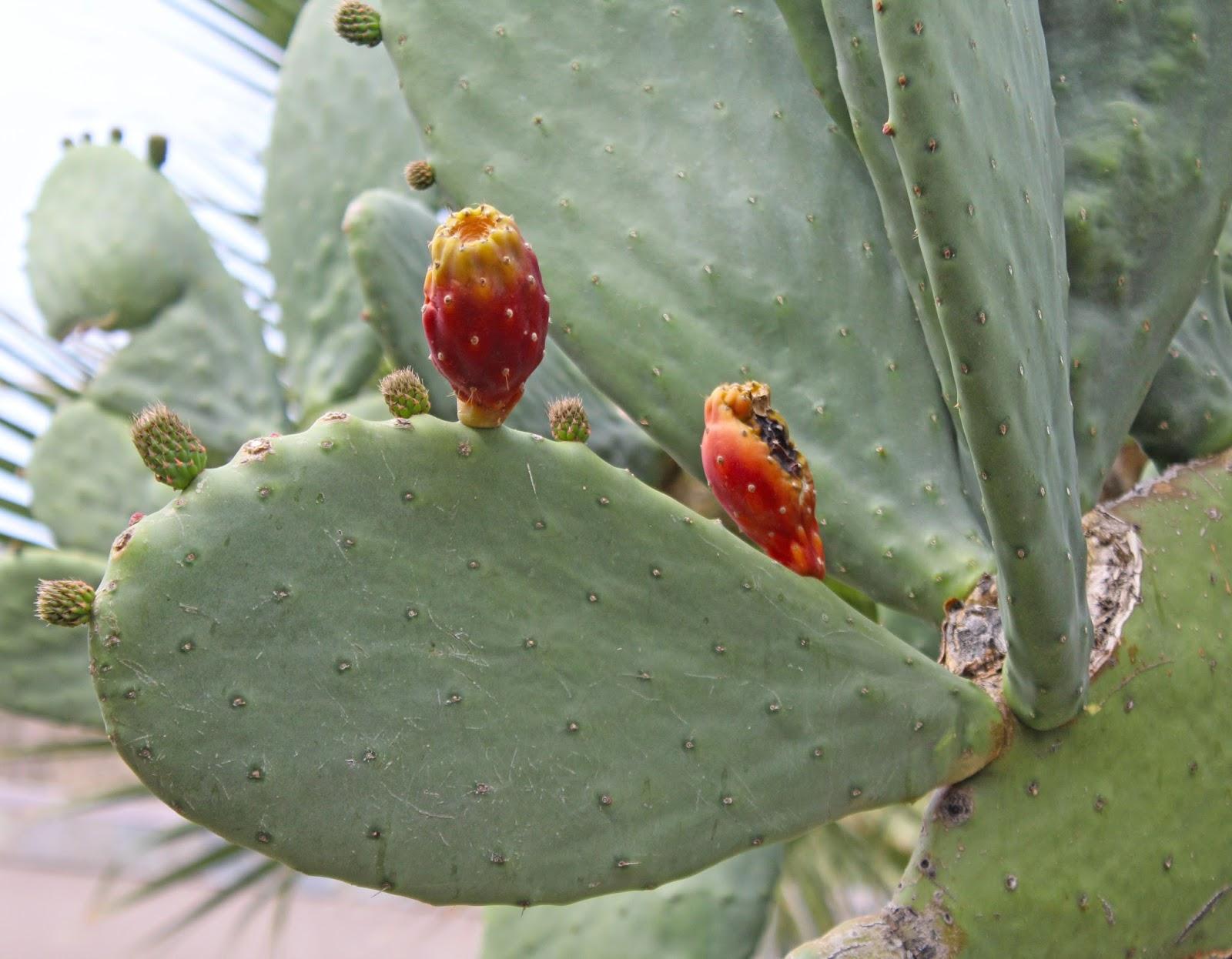 cactarium