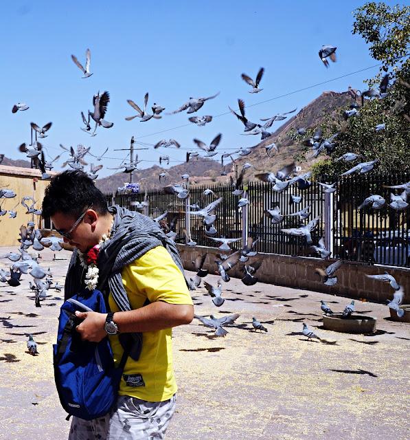 Foto Bersama burung burung di red fort