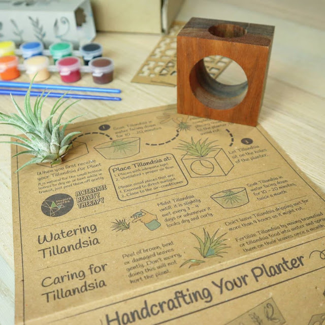 Tillandsia air plant with nyatoh wood