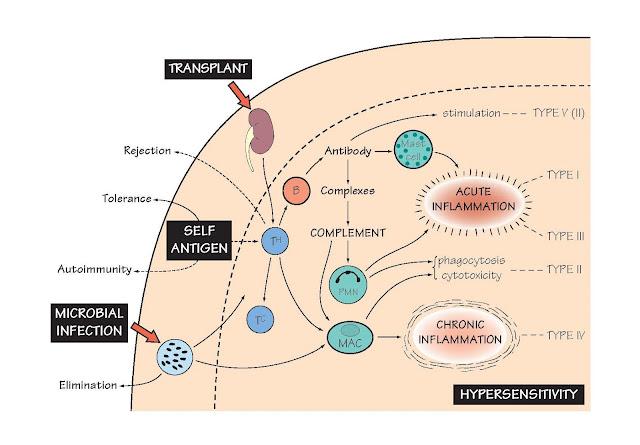 Harmful Immunity: A General Scheme