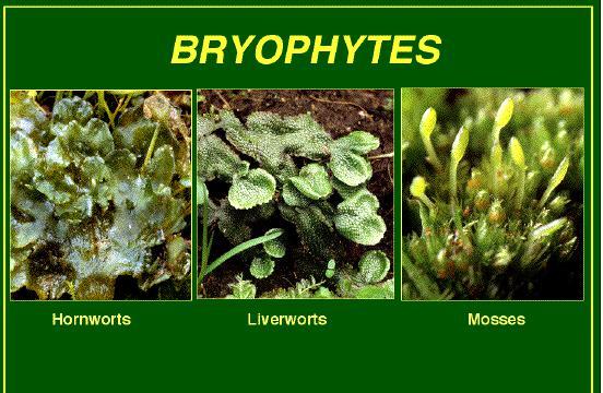 Aquatic plant: aquatic plant or plant like organism.