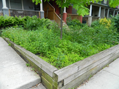 Leslieville Toronto Front Garden Weeding and Makeover Before by Paul Jung Gardening Services--a Toronto Organic Gardener