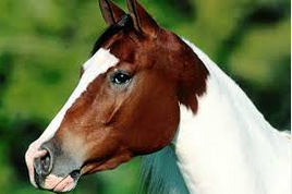 Kuda Laut Bali, Inspirasi dan Eksperimen Para Ilmuan kuda