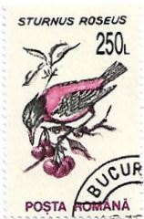Selo Estorninho-rosado
