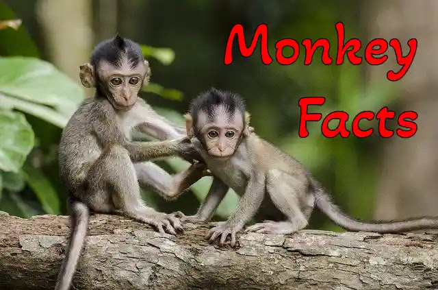 [120+] Unbelievable Information & Facts About Monkey in Hindi