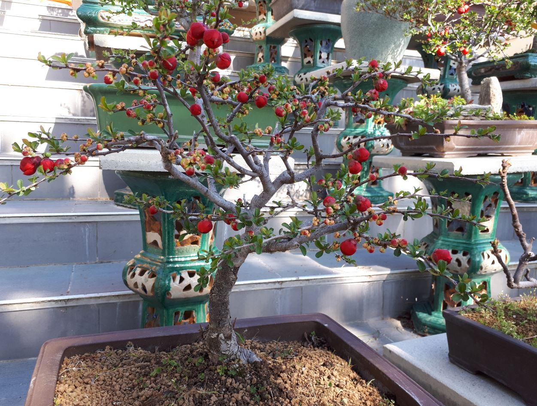 temple de lyon