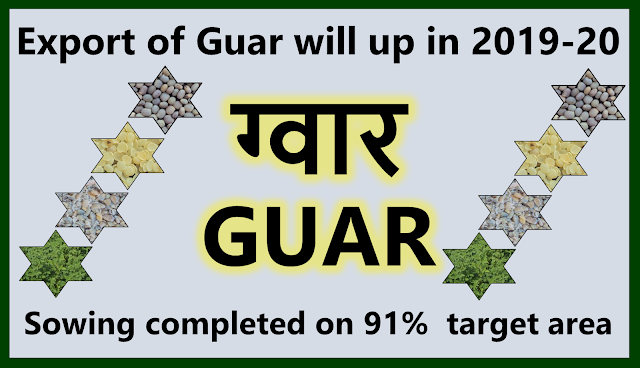Export of Guar products will be increasing in in 2019-2020, Guar, guar gum, guar price, guar gum price, guar demand, guar gum demand, guar seed production, guar seed stock, guar seed consumption, guar gum cultivation, guar gum cultivation in india, Guar gum farming, guar gum export from india , guar seed export, guar gum export, guar gum farming, guar gum cultivation consultancy, today guar price, today guar gum price, ग्वार, ग्वार गम, ग्वार मांग, ग्वार गम निर्यात 2018-2019, ग्वार गम निर्यात -2019, ग्वार उत्पादन, ग्वार कीमत, ग्वार गम मांग, Guar Gum, Guar seed, guar , guar gum, guar gum export from india, guar gum export to USA, guar demand USA, guar future price, guar future demand, guar production 2019, guar gum demand 2019, guar, guar gum, cluster beans, guar gum powder, guar gum price, guar gum uses, ncdex guar, guar price, guar gum price today, cyamopsis tetragonoloba, ncdex guar gum price, guar beans, guar rate today