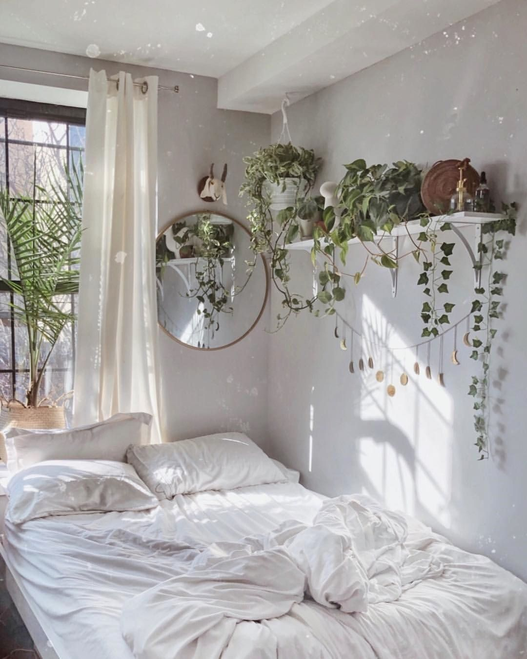 awesome plants for your bedroom
