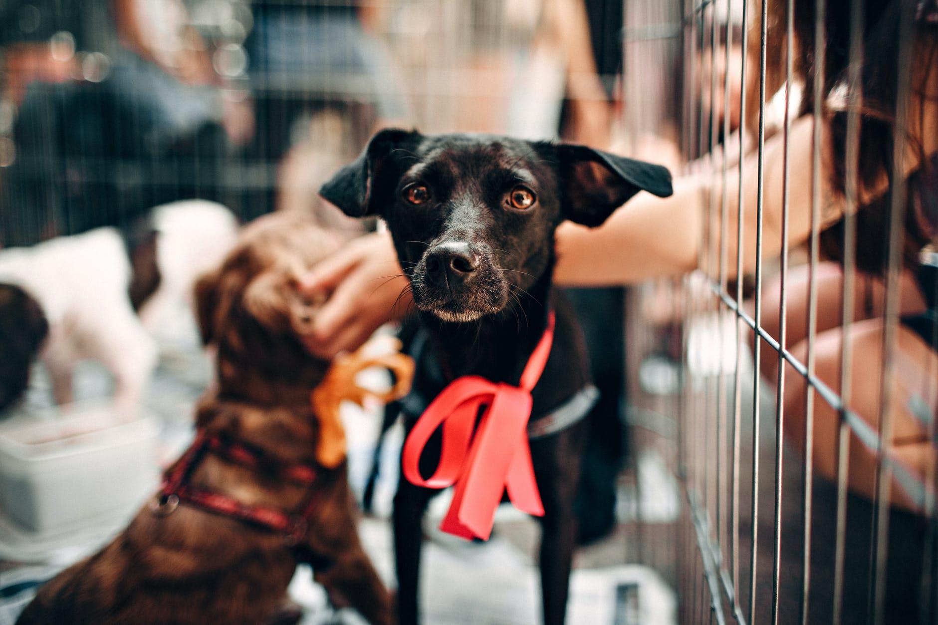 Apprendre à utiliser les cages pour chiens