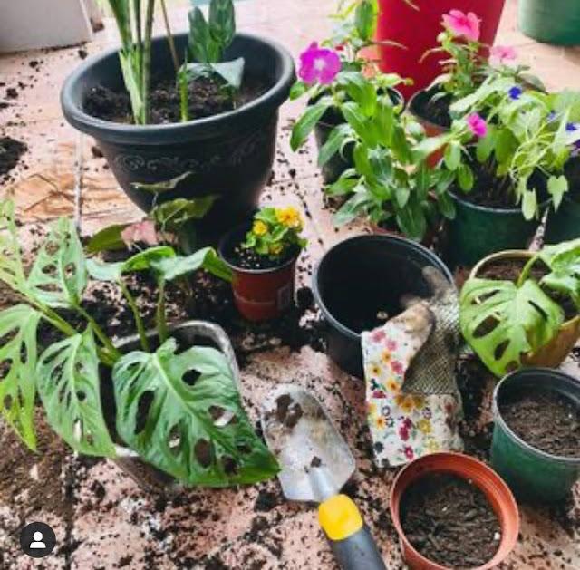 sembrando plantas/terapia horticola