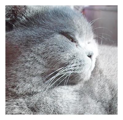 為炎夏做足準備: 持久絲潤滑肌的小秘密 ~ Kanebo COFFRET D'OR 春夏底妝系列(公佈上回 ...