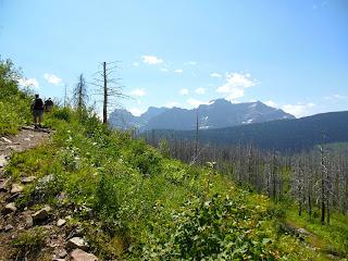Loop Trail post Trapper Creek Fire. Glacier National Park.