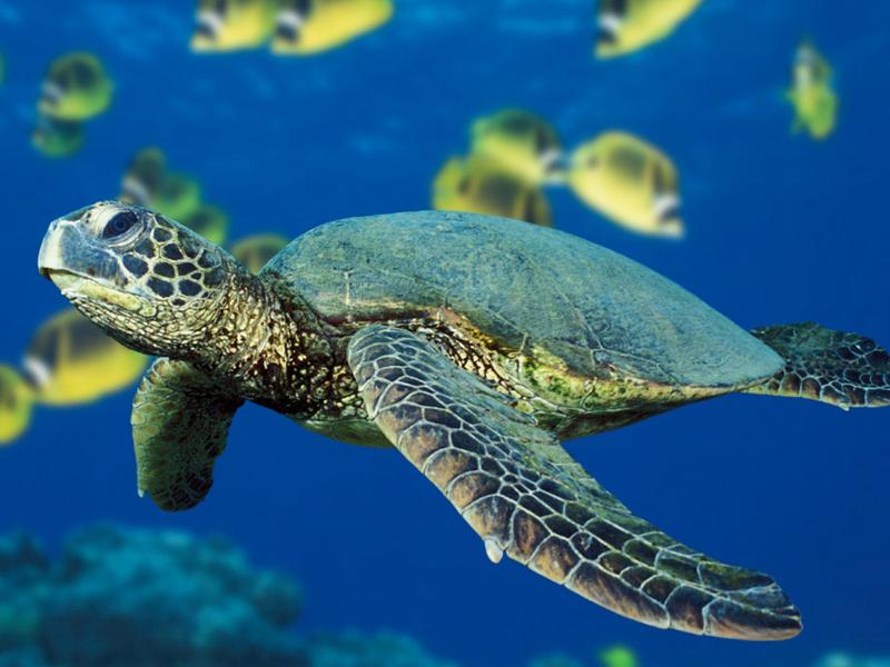 Aquatic Biome Animals