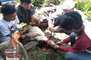 kambing guling dan Aqiqah di Bandung