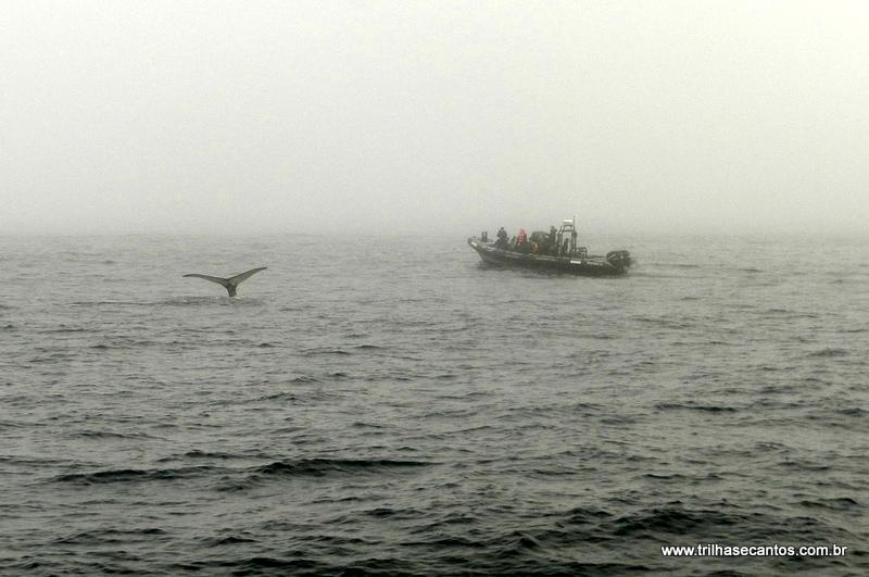 Baleias em Monterey