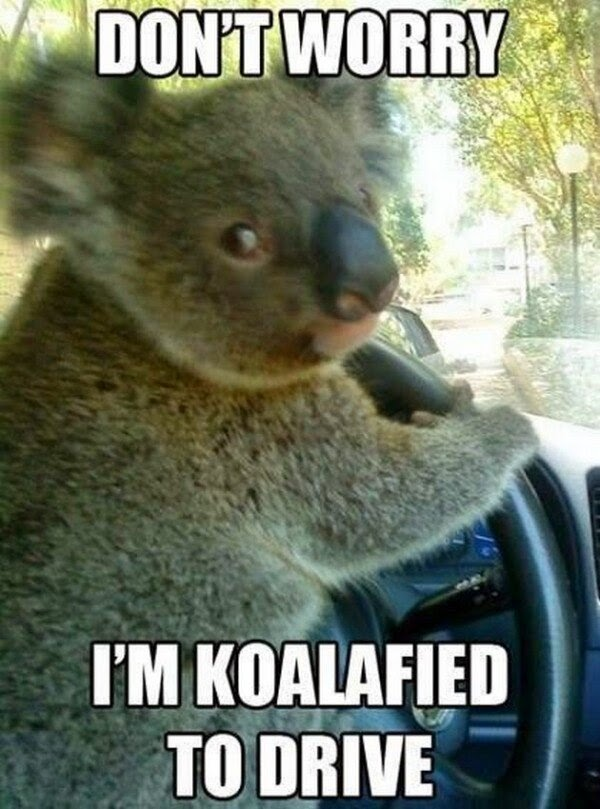 30 Funny animal captions - part 21 (30 pics), captioned animal pictures, koala pun