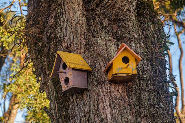 Casinhas para passarinhos