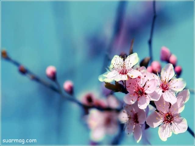صور خلفيات - خلفيات ورد 10   Wallpapers - Flowers backgrounds 10