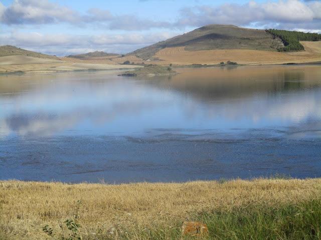 Aqui se ve en el agua la Ruppia que sirve de alimento para muchas aves.
